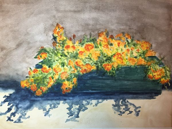 Marigolds and Shadow